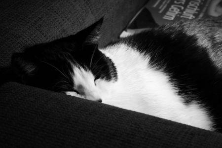 schlafmutze.jpg