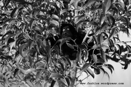ein affenbaum
