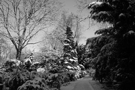 winter-ii